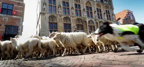 Natte Walcherse schapenkaas is weer helemaal hip