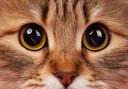 De kalender komt in het najaar uit. De opbrengst van de kalender komt geheel ten goede aan de medische zorg die de katten zo hard nodig hebben.