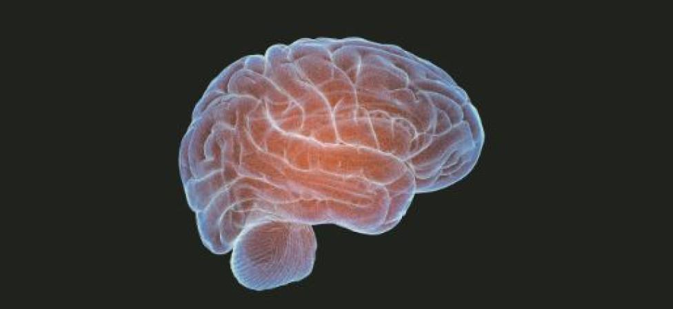 Neurologen herstellen celfuncties in brein van een dood varken
