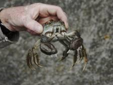 Megaboete dreigt voor groothandel uit Klundert vanwege vissen in verboden water