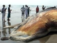 Deux baleines s'échouent sur une plage au Bangladesh