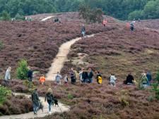 'Leg meer bos aan om de Veluwe te ontzien'