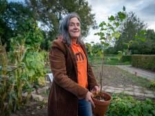 Bemmel krijgt verzamelplaats van bomen: 'Een tweede leven in plaats van takkenversnipperaar'