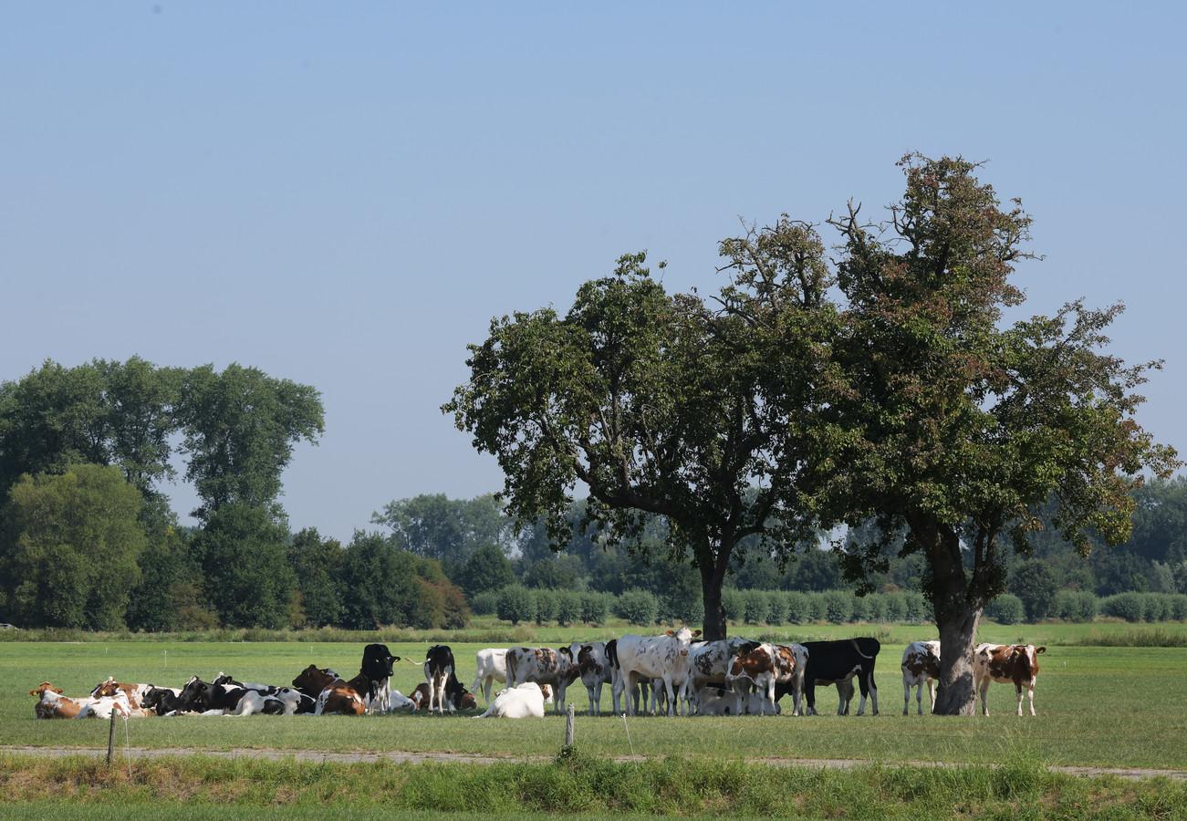 Bomen op landbouwgrond, de provincie Gelderland ziet het graag.