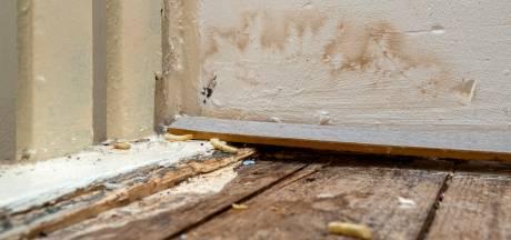 Volkshuisvesting wil klachten van huurders in Arnhemse wijk Malburgen aanpakken: 'Het is maatwerk per woning'