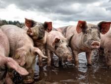 We willen minder vlees eten: dat ziektes van dier op mens overspringen, hangt velen de keel uit