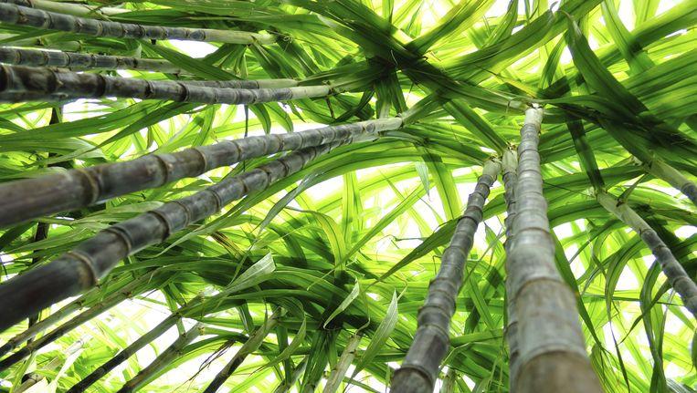 De verwerking van suikerriet levert groene energie op. Beeld THINKSTOCK
