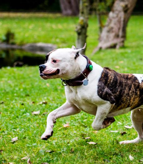 Angst voor totaal hondenverbod in Kralingse Bos