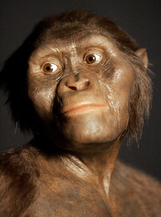 """""""Lucy"""" est le surnom du fossile d'Australopithecus afarensis découvert en Éthiopie en 1974"""