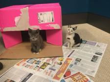 Kittens 'liften' onder motorkap mee van Lochem naar Hengelo