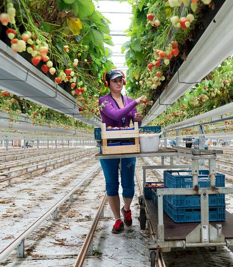 Fors meer arbeiders uit Polen naar Bergerden