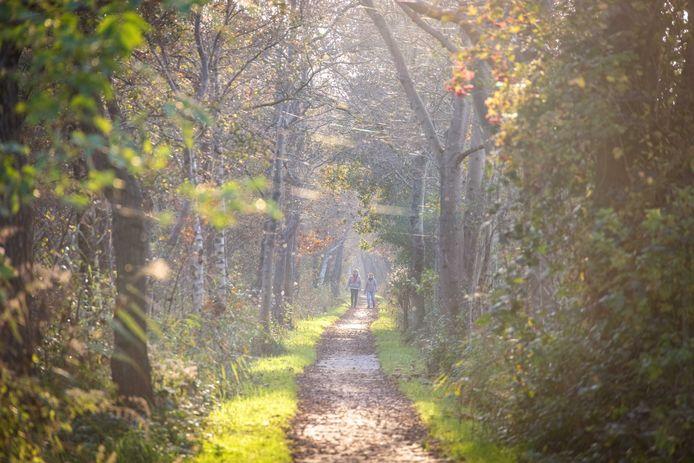 Een pad op de Kalenberg.