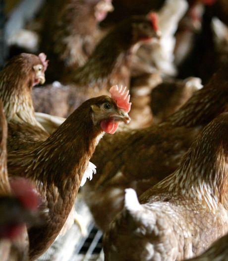 Het nieuwe Land van Cuijk in cijfers: 1 stad, 4 hockeyclubs, 12.844.423 kippen