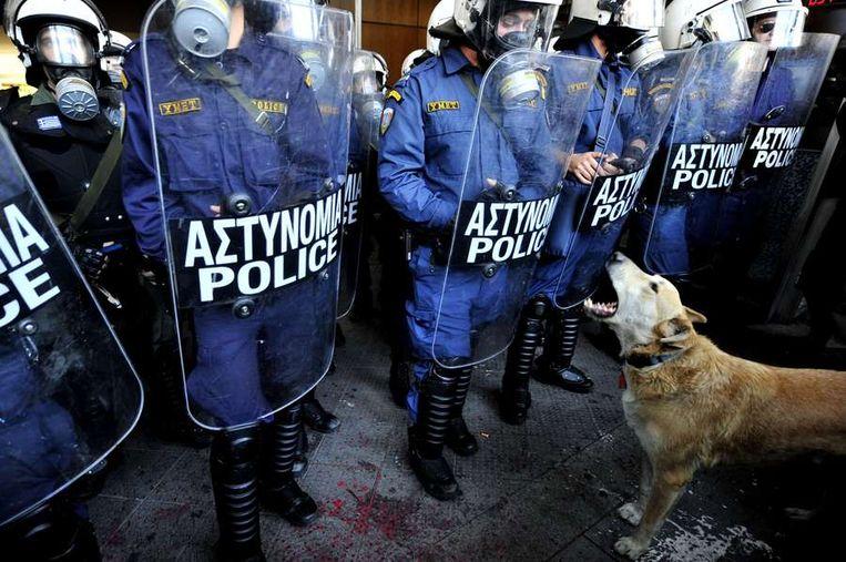 Ook dit weekend weer aanwezig: Loukanikos. Grieks voor 'worstje', maar het gaat hier over de hond. Die al sinds 2008 zelden ontbreekt bij protesten in Griekenland, of het nu tegen bezuinigingsmaatregelen van de Griekse overheid of het uitblijven van Europese noodsteun is. De straathond werd vorig jaar door tijdschrift Time uitgeroepen tot één van de betogers van het jaar, nadat het tijdschrift 'de betoger' had uitgeroepen tot persoon van het jaar.<br /><br />Hier: Loukanikos in december 2008 in Athene. © AFP<br /> Beeld
