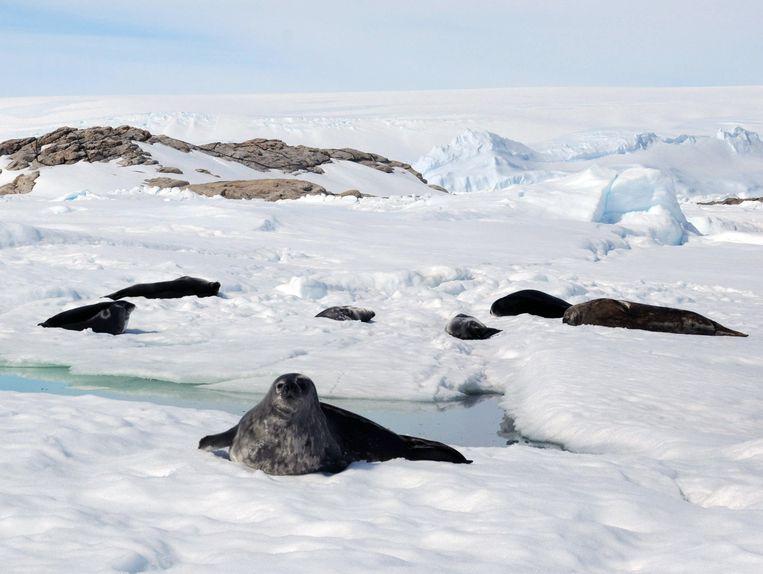 Het blijft bijzonder, zeehonden spotten in de vrije natuur. Beeld Alamy Stock Photo