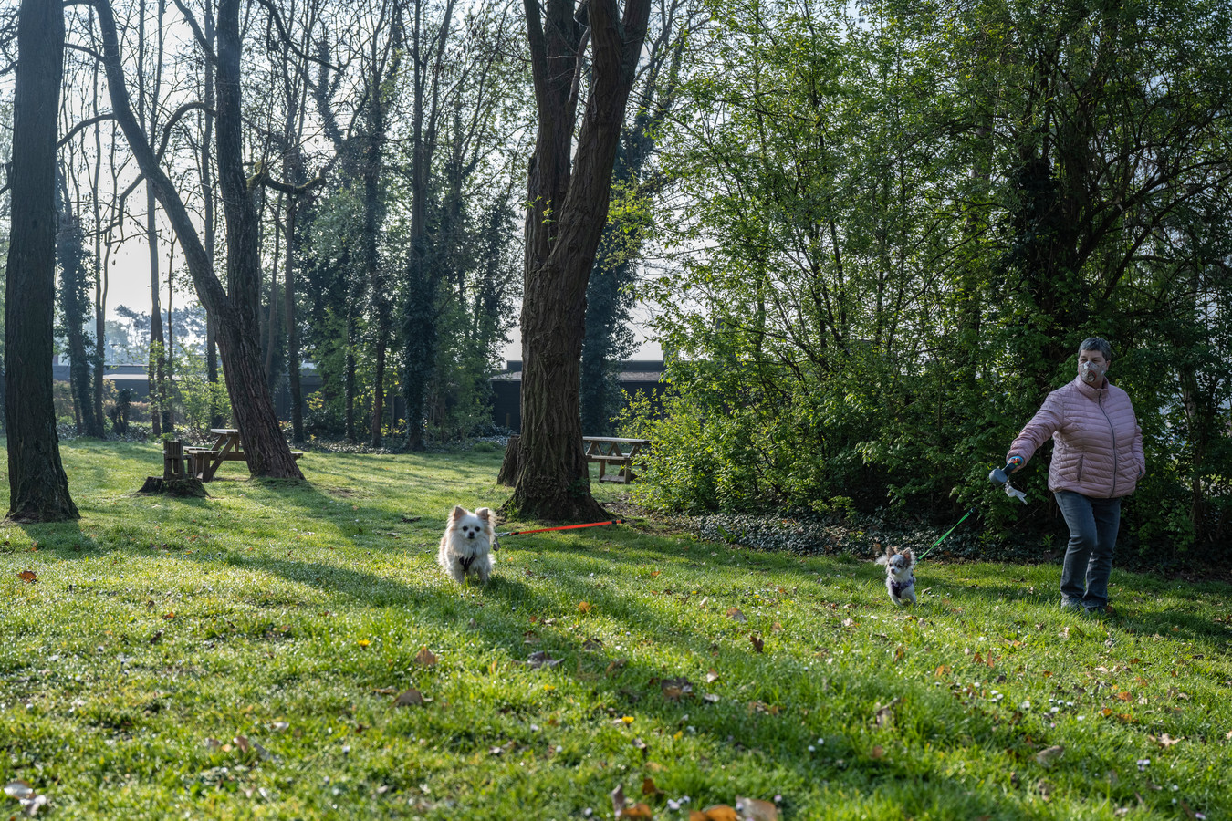 De nieuwe hondenlosloopweide in Dendermonde.