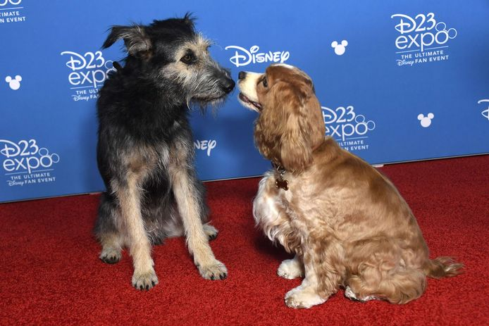 Lady and the Tramp op de rode loper van D23.