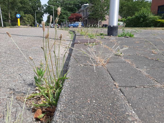 Het meeste geld voor onderhoud in de openbare ruimte gaat naar het verwijderen van onkruid.