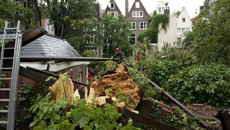 De Anne Frankboom werd in 2010 weggehaald uit de binnentuin achter het Achterhuis aan de Prinsengracht in Amsterdam. Beeld anp