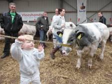 Rhenen wil weten hoeveel échte boeren er nog zijn, aantal in 20 jaar gehalveerd tot 70: 'Wie boert nog echt?'