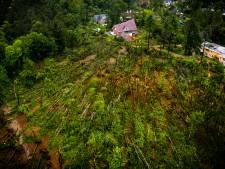 Wandelen langs de fladderiep: verwoeste bossen in Leersum krijgen straks een zuidelijk tintje