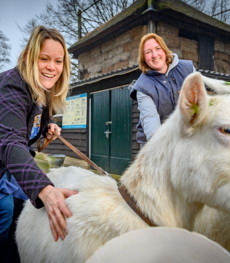 Kinderboerderij in Zutphen gered na noodkreet: 'Nu ben ik een blije en optimistische voorzitter'