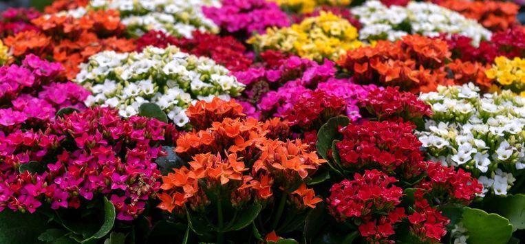 deze-8-kamerplanten-kunnen-tegen-warmte-en-ko.jpg