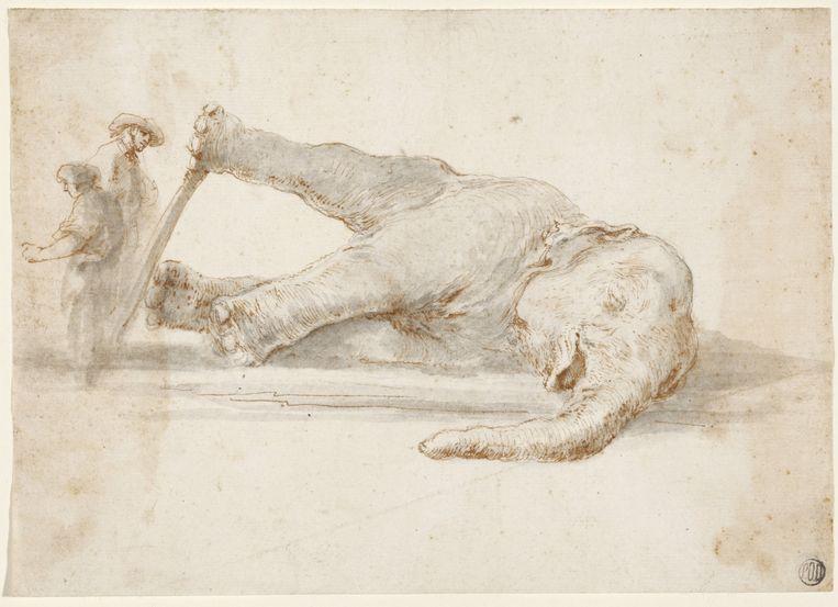 Stefano della Bella's tekening na de dood van Hansken in november 1655. Beeld
