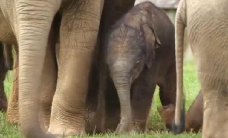 olifant-queen-elizabeth.png