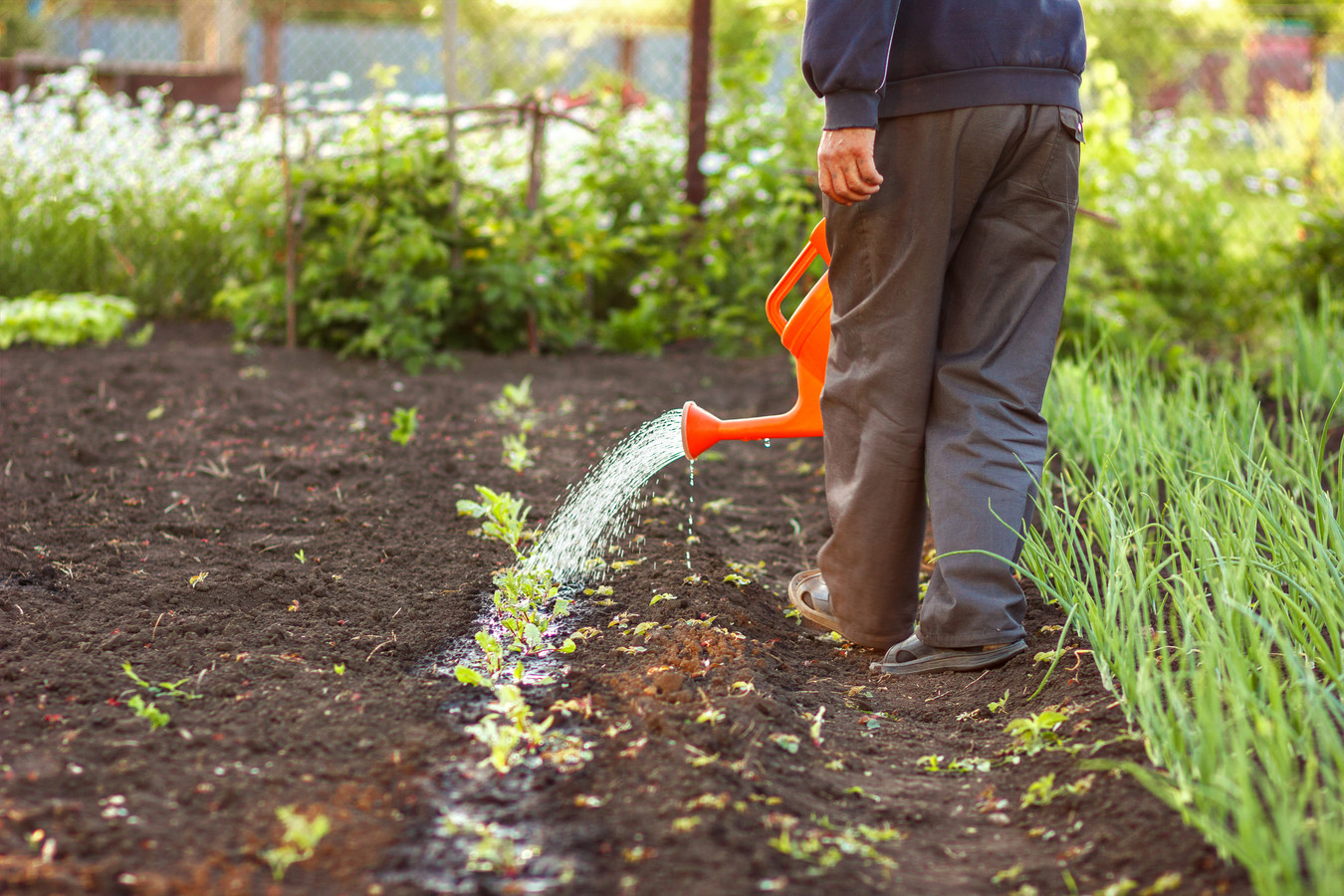 Tuinieren is een goede manier om de hersenen zo lang mogelijk gezond te houden.