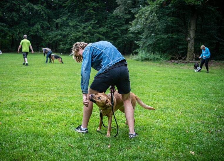 Een cursus voor honden in Malden. Hond Siep met zijn baasje Berend Flamink. Beeld Koen Verheijden