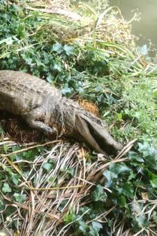 'Krokodil' in water Honselersdijk