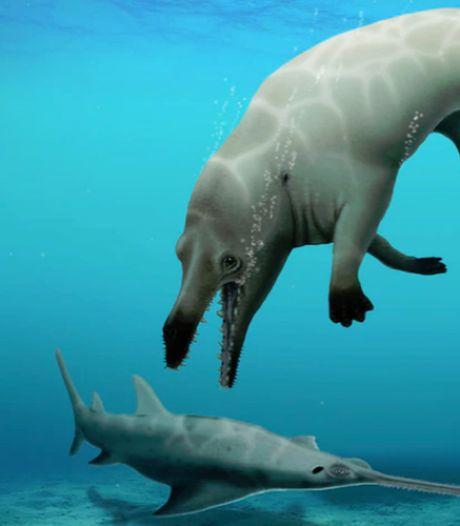 Vierpotige walvisachtige gevonden in Egypte