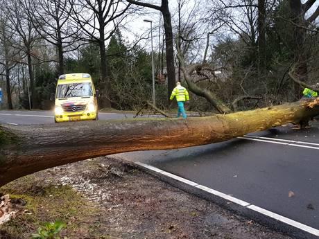 Fietser komt onder omvallende boom op Diedenweg in Wageningen