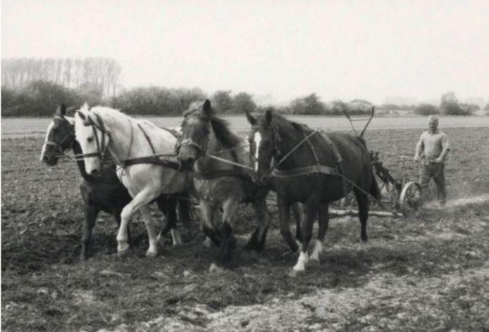 Een oude foto uit de Landschapsbiografie.