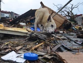Hond en baasje jaar na tyfoon Haiyan weer herenigd