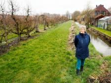 Perenbomen of huizen: hoe een bouwplan voor dertig woningen een tweedeling veroorzaakt in Schalkwijk