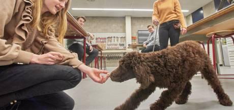 Middelbare school in Oss heeft een schoolhond: 'Hond heeft positieve invloed op algemene ontwikkeling'