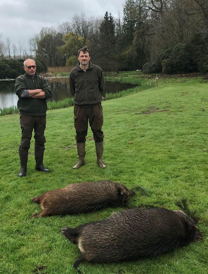 Luc De Heyn (links) en Dominique De Roeck bij de twee everzwijnen die afgelopen weekend in Hofstade geschoten werden. De moeder woog 82,5 kilogram, het jong 60 kilogram.