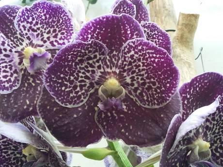 Lang leve de orchidee