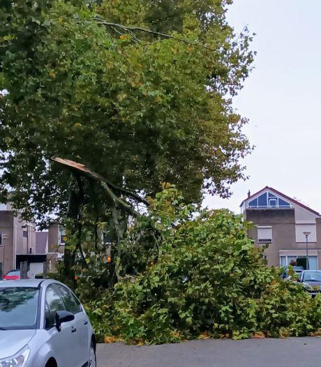 Stormschade in Tiel: automobiliste kan net op tijd remmen voor enorme tak