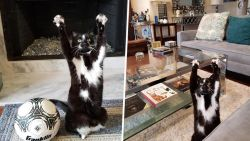 Deze kat steekt hele tijd haar poten in de lucht en niemand weet waarom