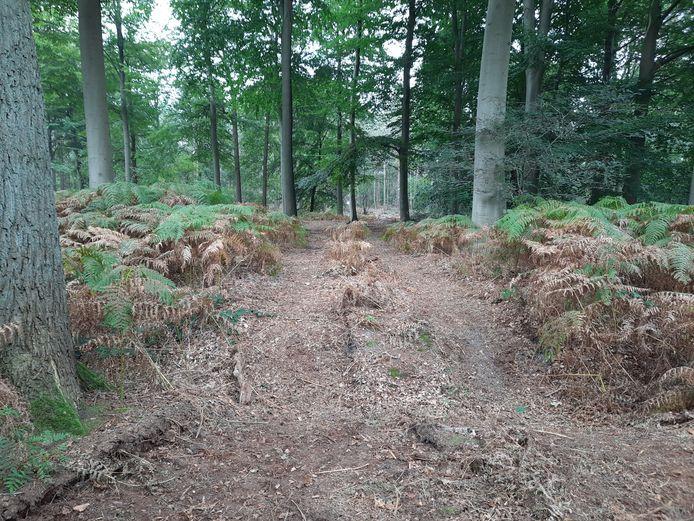 Met zware machines zijn open ruimtes in het bos gecreëerd, maar dat zijn geen nieuwe wandelpaden.