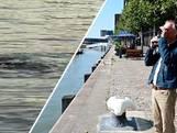 Zwemt daar 'het monster' van de Rijnhaven? 'Ik vind het machtig interessant'