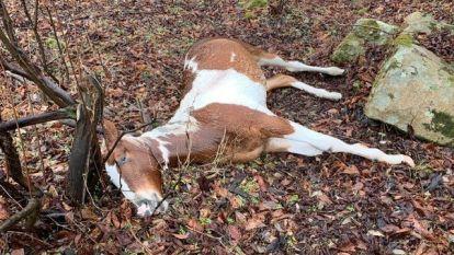 15 paarden koelbloedig doodgeschoten in de VS: gouden tipgever krijgt 15.000 dollar