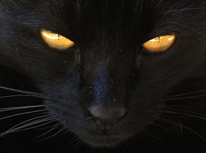 Een zwarte kat betekent in het bijgeloof weinig goeds.