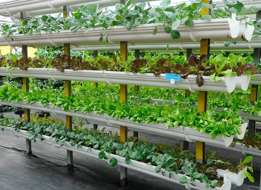 Vertical Farming. Foto: Shutterstock