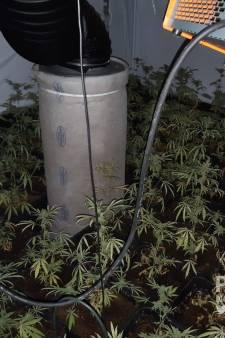 Politie ontdekt hennepkwekerij in Overdinkel, ook gaspistool in beslag genomen