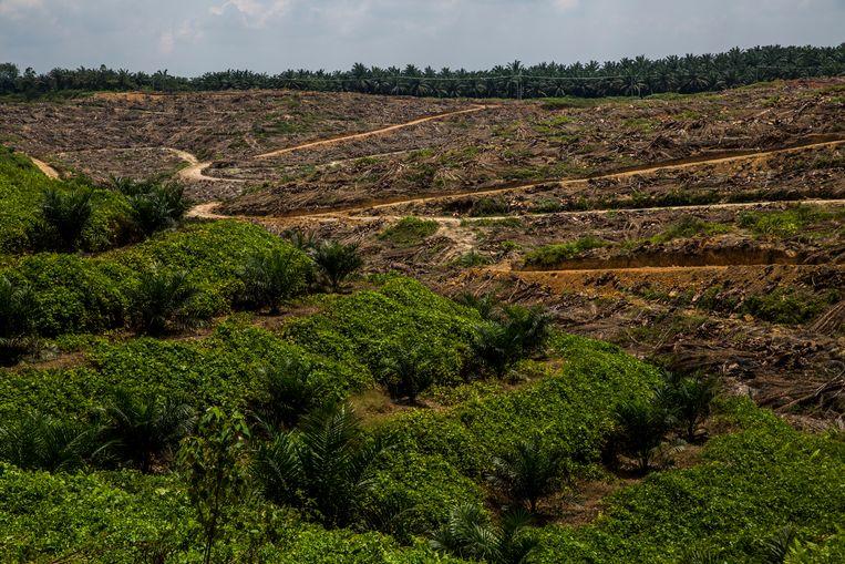 Een plantage op Sumatra, Indonesië, waar de teelt van oliepalmbomen de bodem heeft uitgeput. Foto Kemal Jufri, Milieudefensie Beeld kemal jufri