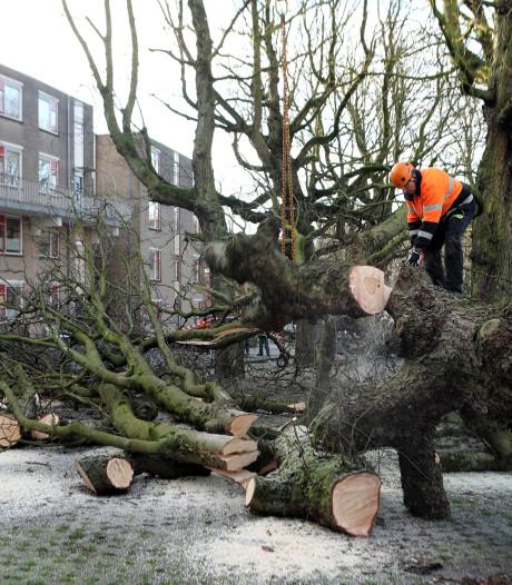 Kaalslag op Rijtuigweg, nog eens 74 bomen gekapt